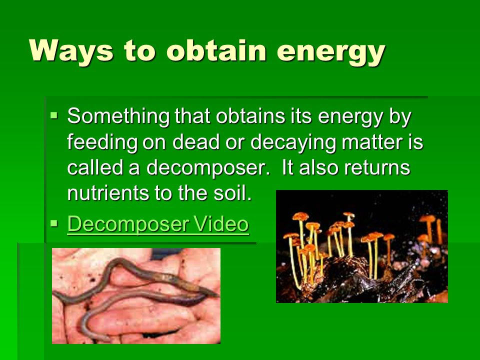 Ways to obtain energy An organism that must get its energy from organisms is called a consumer or a heterotroph.