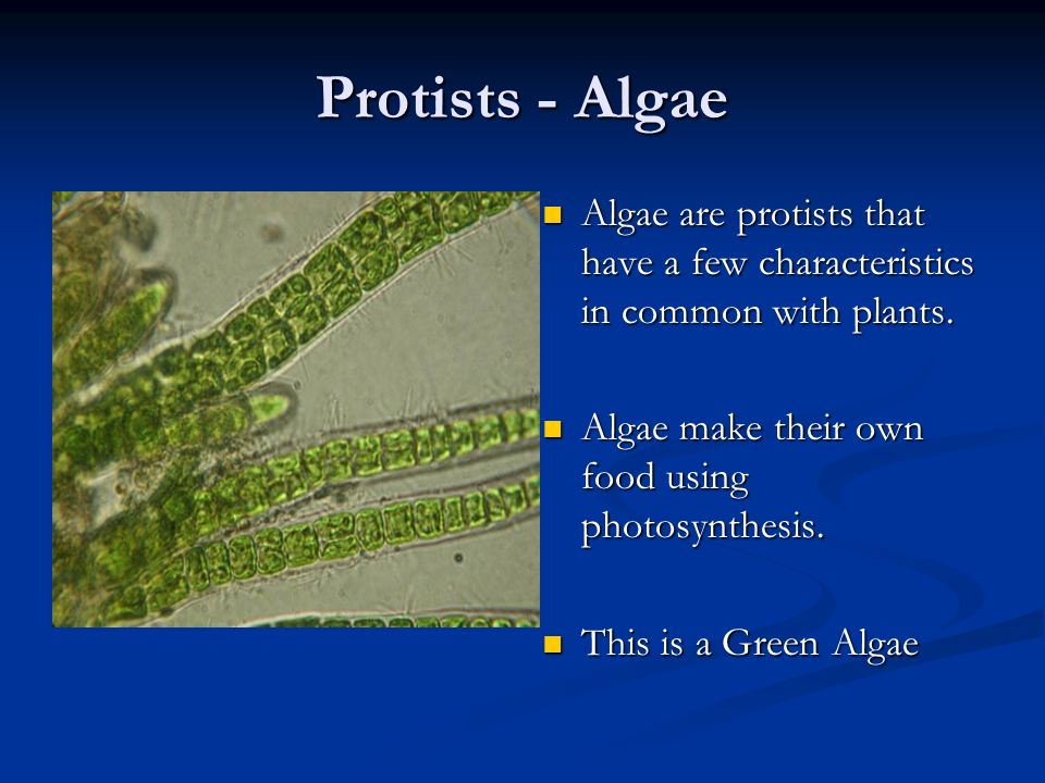 Algae-Euglenoids Euglenoids are green and use a whip like structure called a flagellum to whip themselves through aqueous solutions.