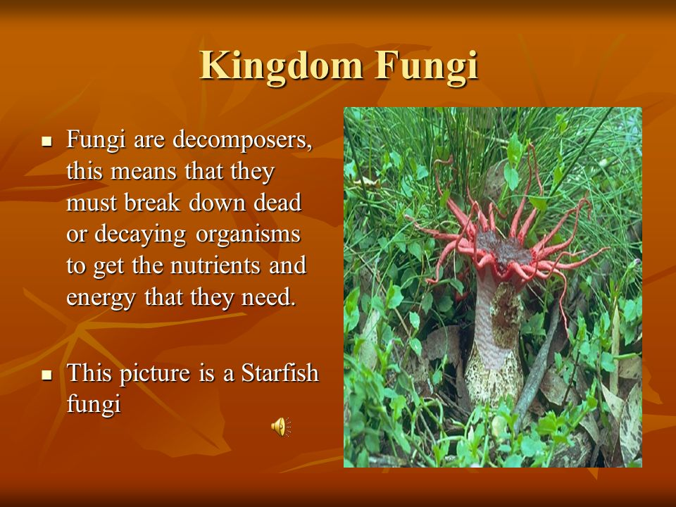 Kingdom Fungi 250,000 Species 250,000 Species Eukaryotic and Multicellular Eukaryotic and Multicellular Fungi must obtain their food from other organi