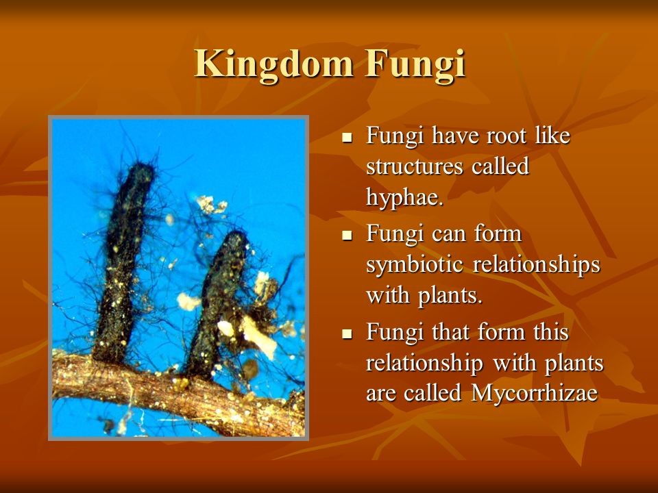 Kingdom Fungi Fungi are decomposers, this means that they must break down dead or decaying organisms to get the nutrients and energy that they need. F