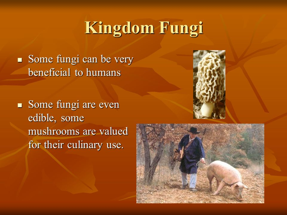 Kingdom Fungi Some Fungi are very harmful to humans, to the right is a fungus called Ringworm or Tinea capitis Some Fungi are very harmful to humans,