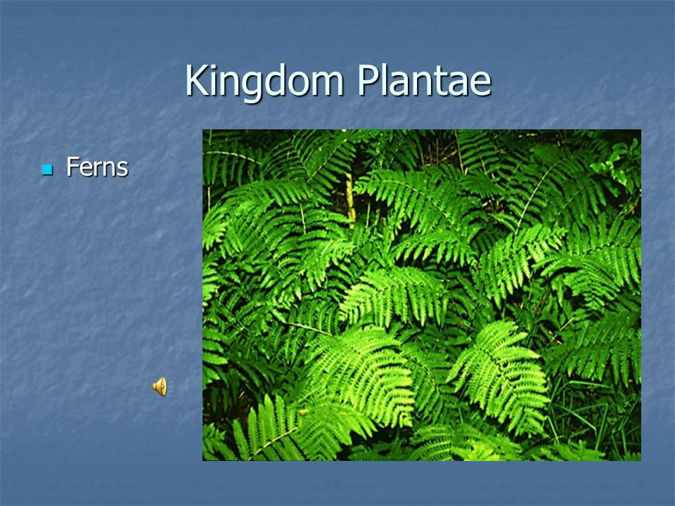 Kingdom Plantae Bryophytes or Mosses