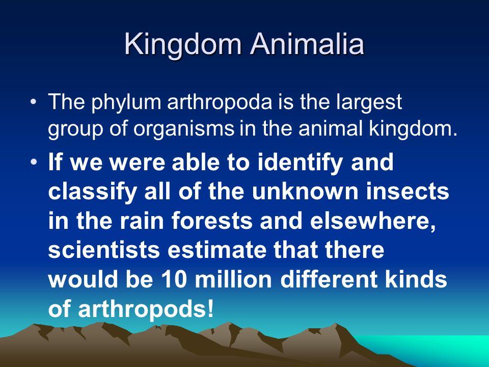 Kingdom Animalia The animal Kingdom contains the following different groups of animals: –Amphibians-Echinoderms –Arthropods-Mammals –Birds-Mollusks –F