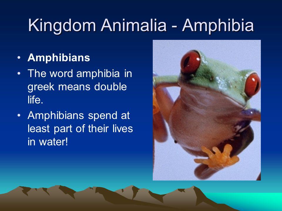 Kingdom Animalia The phylum arthropoda is the largest group of organisms in the animal kingdom.