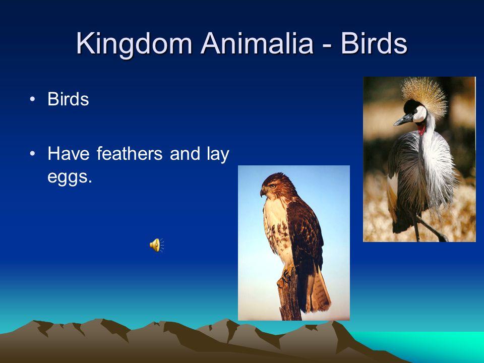 Kingdom Animalia - Arthropods Arthropoda Bilateral Symmetry There are five main groups of arthropods: horseshoe crabs, arachnids, crustaceans, centipe