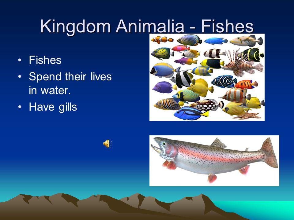 Kingdom Animalia - Birds Birds Have feathers and lay eggs.