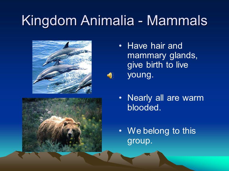 Kingdom Animalia - Echinodermata Spiny skin, 5 part body, internal skeleton, tube feet. Starfish, urchins, sand dollars, sea cucumbers, sea lillies.