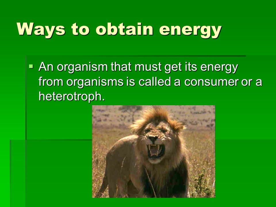 Ways to Obtain Energy An organism that can make its own energy through the process of photosynthesis is known as a producer or an autotroph. An organi