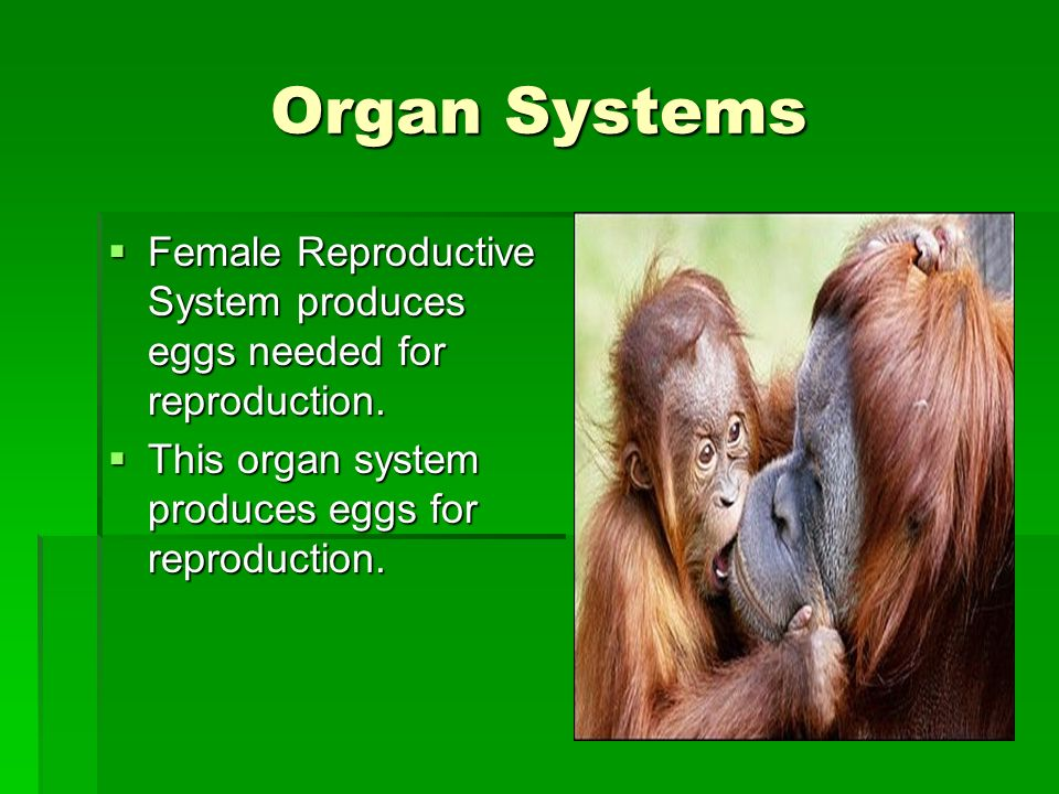 Organ Systems Female Reproductive System produces eggs needed for reproduction. Female Reproductive System produces eggs needed for reproduction. This