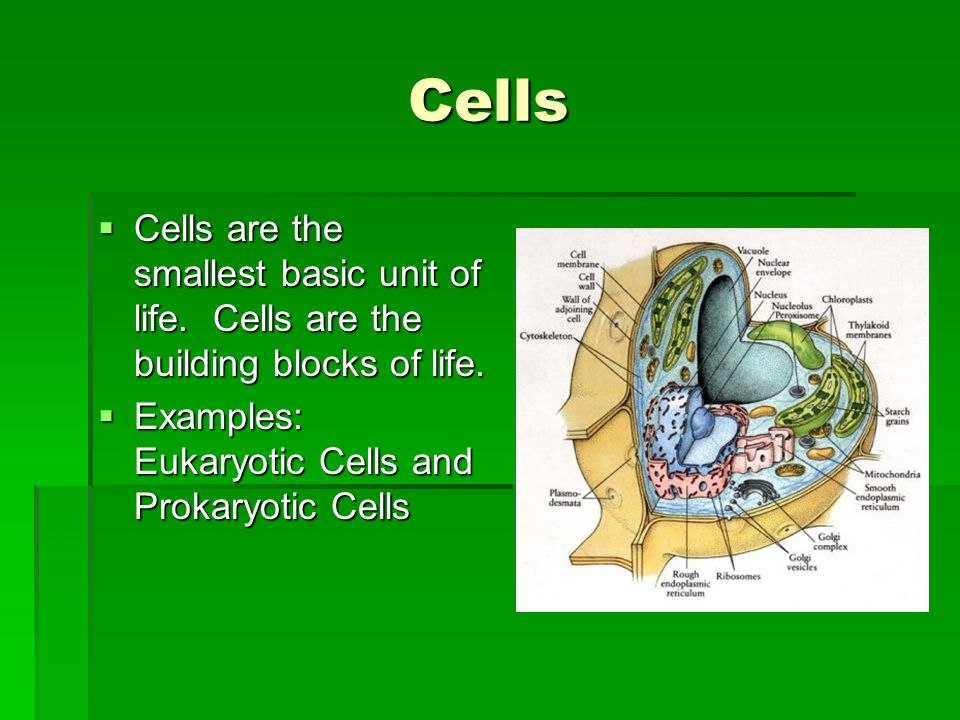 Cells Cells are the smallest basic unit of life. Cells are the building blocks of life. Cells are the smallest basic unit of life. Cells are the build