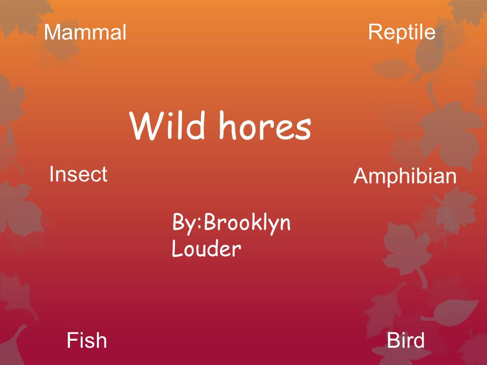 By:Brooklyn Louder Wild hores Mammal Reptile BirdFish Insect Amphibian