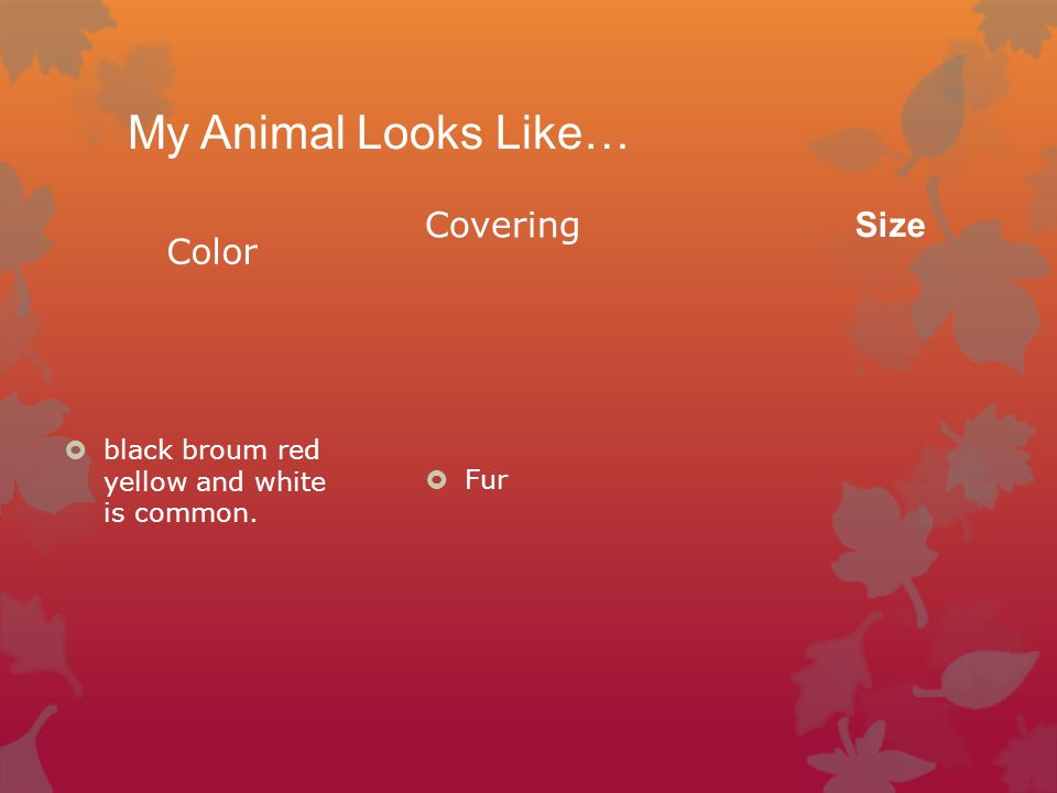 My Animal Looks Like… Color black broum red yellow and white is common. Covering Fur Size