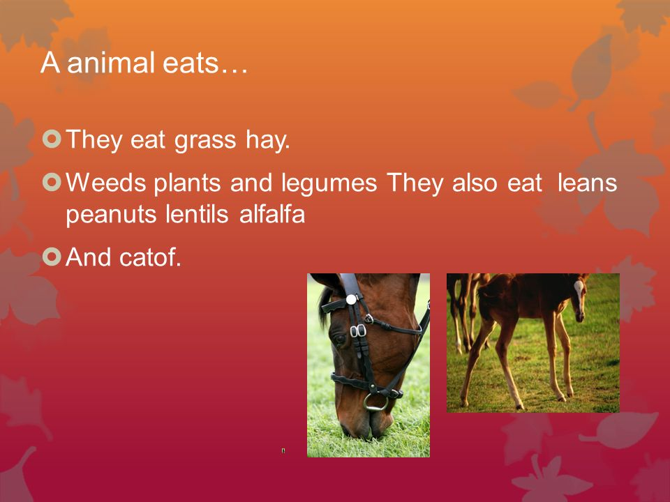 A animal eats… They eat grass hay.