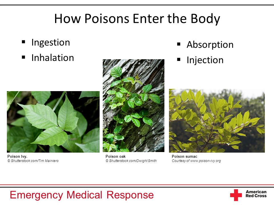 Emergency Medical Response How Poisons Enter the Body Ingestion Inhalation Absorption Injection Poison Ivy. © Shutterstock.com/Tim Mainiero Poison oak