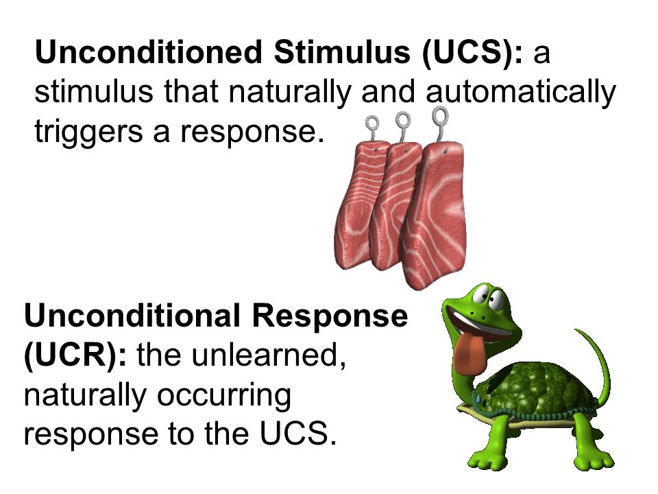 Unconditioned Stimulus (UCS): a stimulus that naturally and automatically triggers a response. Unconditional Response (UCR): the unlearned, naturally