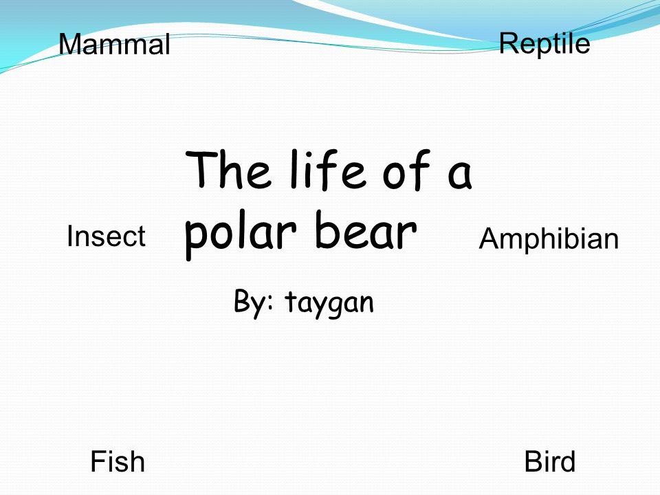 a male polar bear weighs 1,100 pounds.A female polar bear weighs about 450 pounds.
