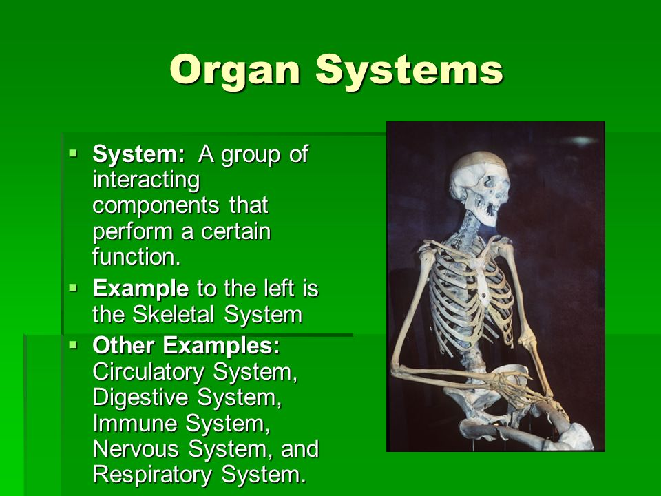Organ Systems System: A group of interacting components that perform a certain function. System: A group of interacting components that perform a cert