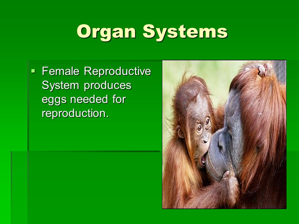 Organ Systems Female Reproductive System produces eggs needed for reproduction. Female Reproductive System produces eggs needed for reproduction.