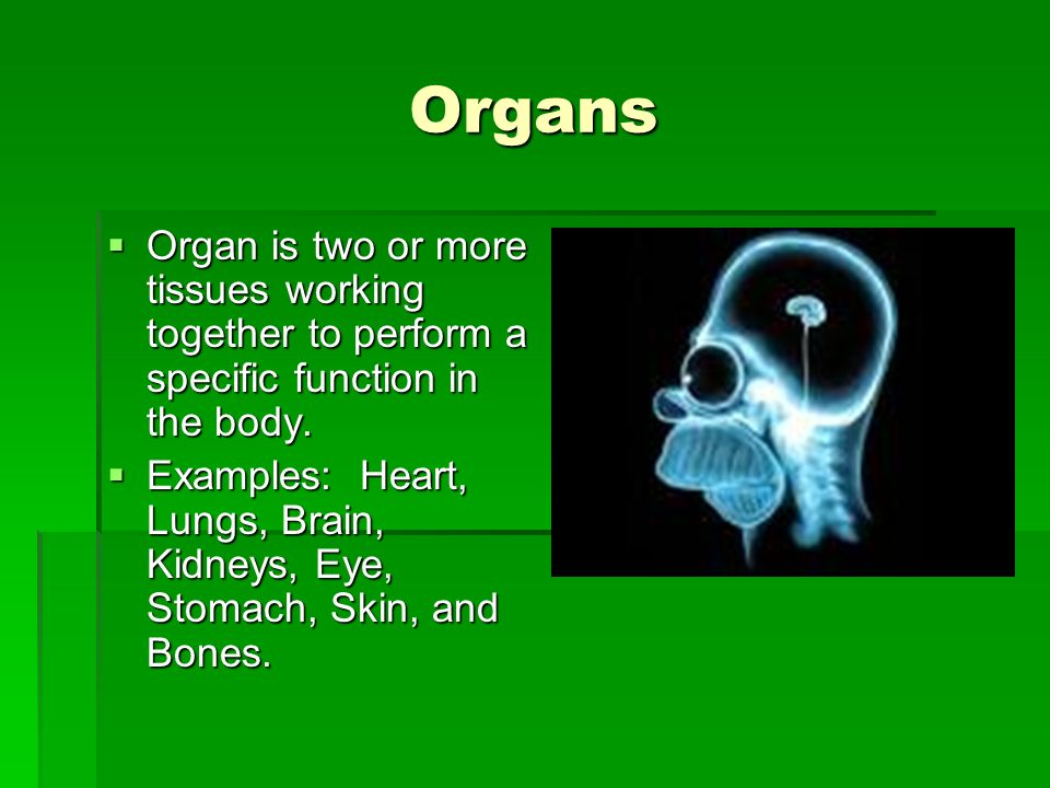 Organs Organ is two or more tissues working together to perform a specific function in the body. Organ is two or more tissues working together to perf