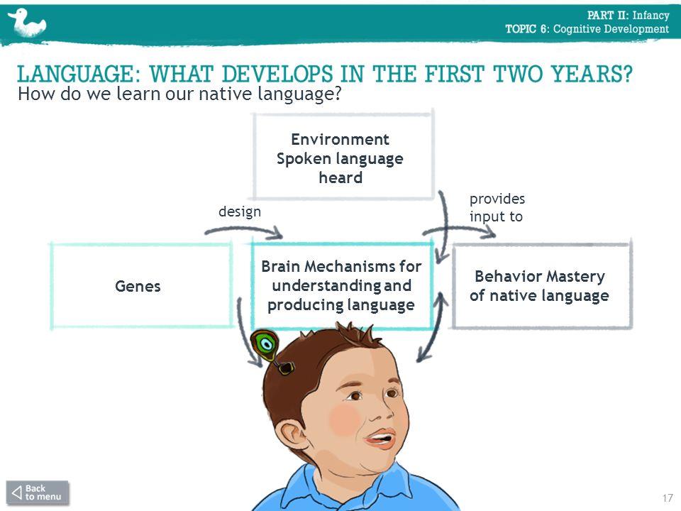 Environment Spoken language heard Genes Brain Mechanisms for understanding and producing language Behavior Mastery of native language design provides