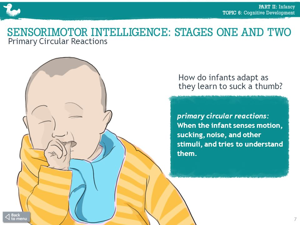 Primary Circular Reactions primary circular reactions: When the infant senses motion, sucking, noise, and other stimuli, and tries to understand them.