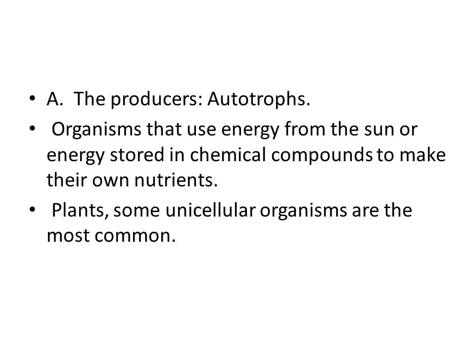 A. The producers: Autotrophs. Organisms that use energy from the sun or energy stored in chemical compounds to make their own nutrients. Plants, some