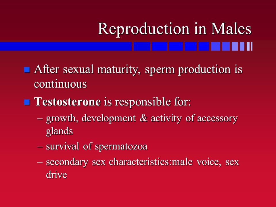 Reproduction in Males n After sexual maturity, sperm production is continuous n Testosterone is responsible for: –growth, development & activity of ac