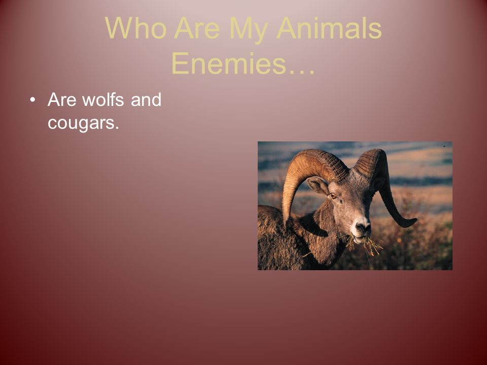 Who Are My Animals Enemies… Are wolfs and cougars.