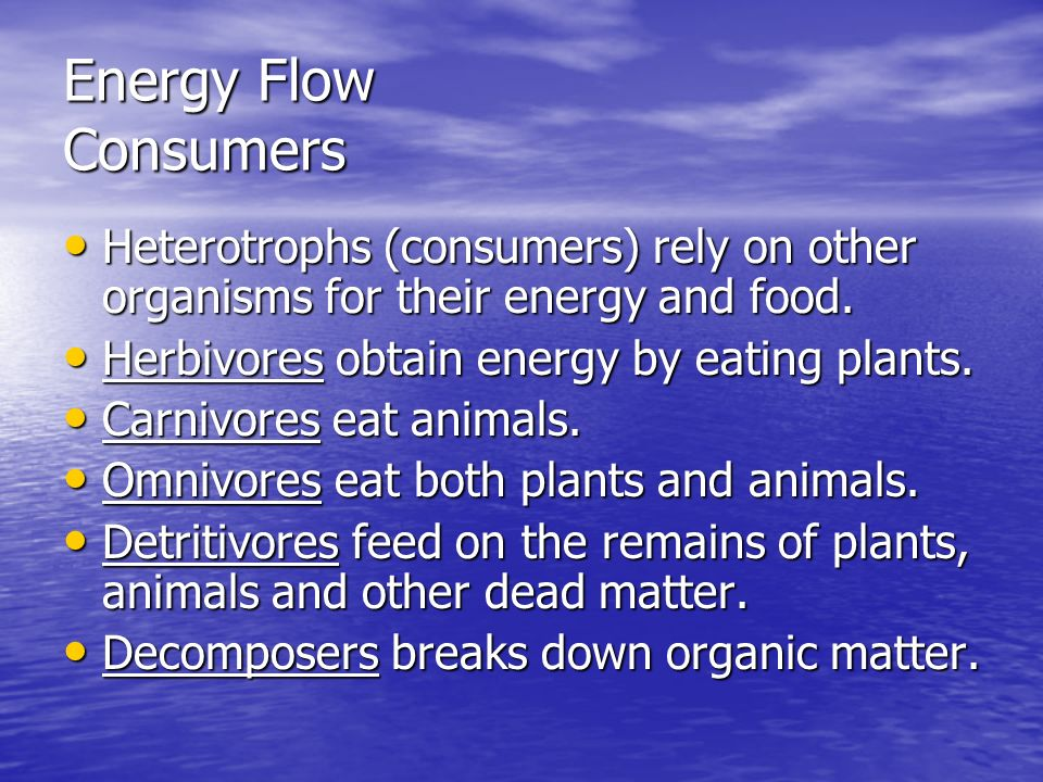 Energy Flow Consumers Heterotrophs (consumers) rely on other organisms for their energy and food. Heterotrophs (consumers) rely on other organisms for