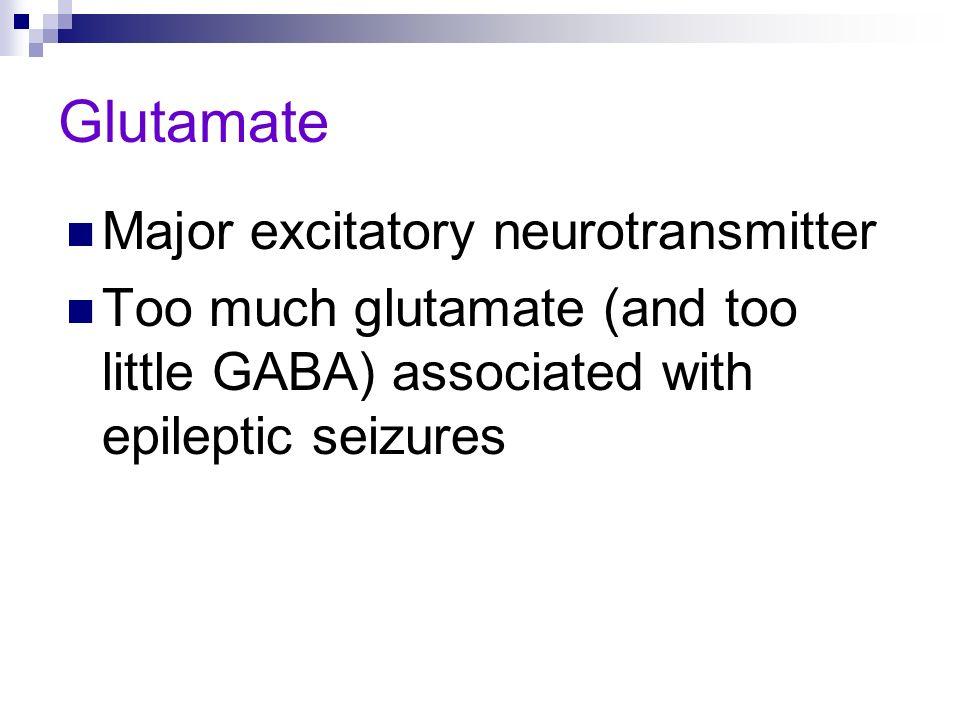 Glutamate Major excitatory neurotransmitter Too much glutamate (and too little GABA) associated with epileptic seizures