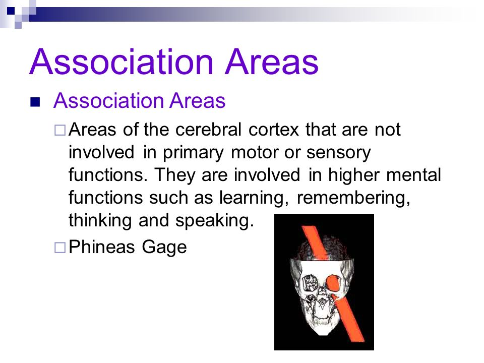 Association Areas Areas of the cerebral cortex that are not involved in primary motor or sensory functions. They are involved in higher mental functio