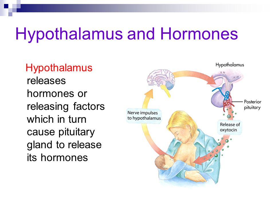 Hypothalamus and Hormones Hypothalamus releases hormones or releasing factors which in turn cause pituitary gland to release its hormones