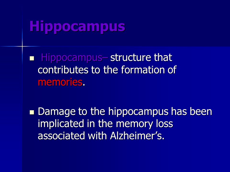 Hippocampus Hippocampus– structure that contributes to the formation of memories. Hippocampus– structure that contributes to the formation of memories