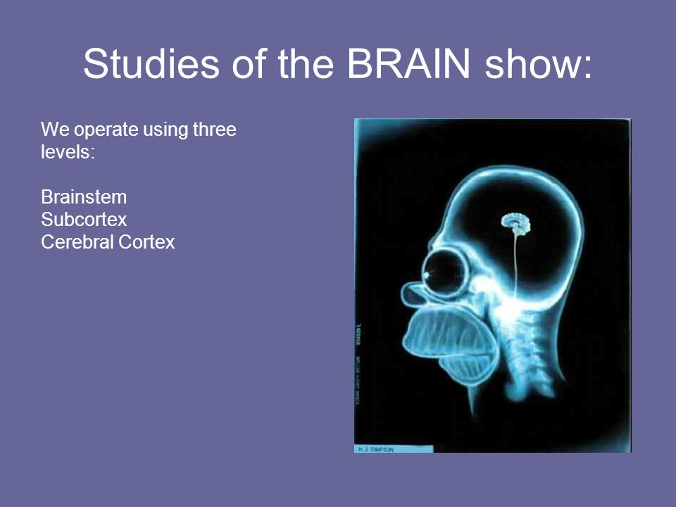 Studies of the BRAIN show: We operate using three levels: Brainstem Subcortex Cerebral Cortex