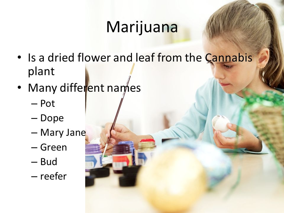 Is a dried flower and leaf from the Cannabis plant Many different names – Pot – Dope – Mary Jane – Green – Bud – reefer