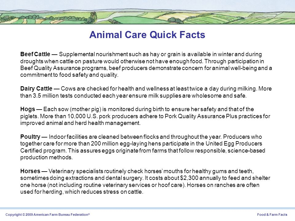 Copyright © 2009 American Farm Bureau Federation ® Food & Farm Facts Animal Care Quick Facts Beef Cattle Supplemental nourishment such as hay or grain