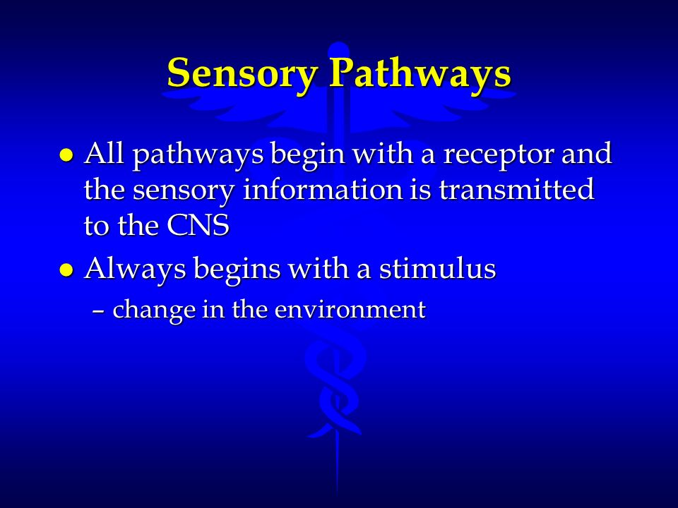 Sensory Pathways l All pathways begin with a receptor and the sensory information is transmitted to the CNS l Always begins with a stimulus –change in