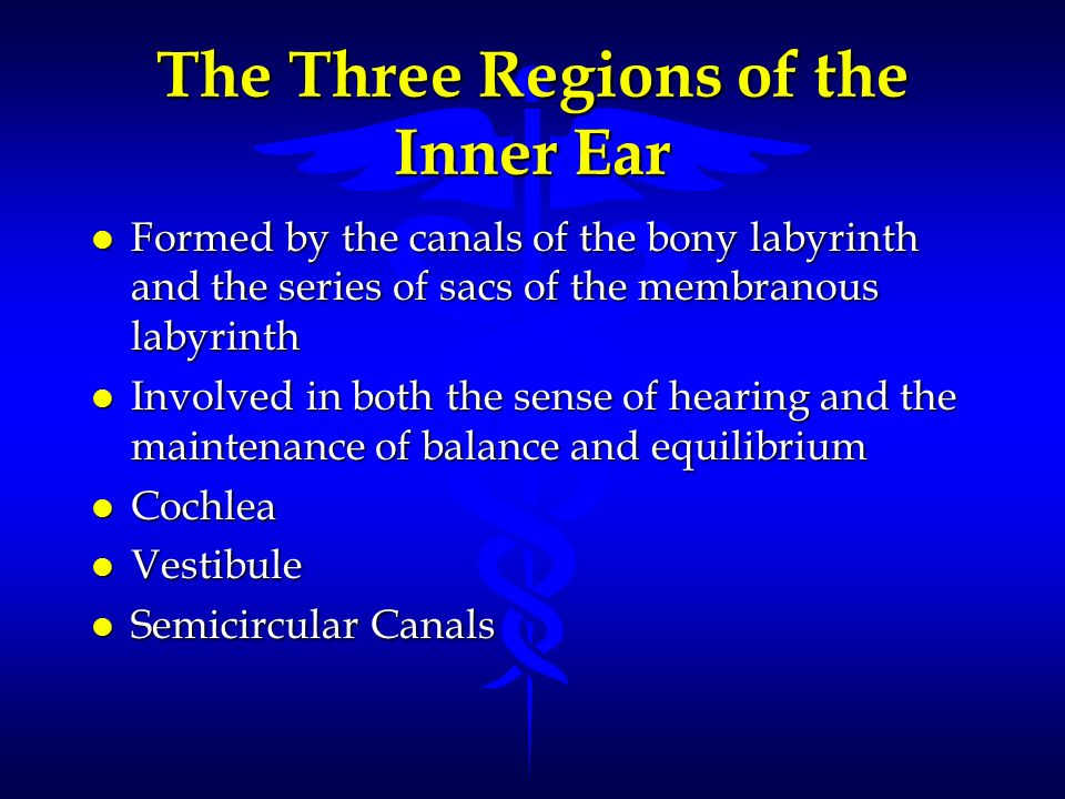 The Three Regions of the Inner Ear l Formed by the canals of the bony labyrinth and the series of sacs of the membranous labyrinth l Involved in both