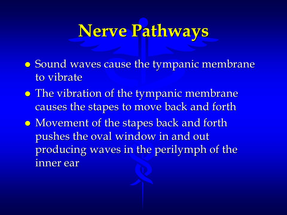 Nerve Pathways l Sound waves cause the tympanic membrane to vibrate l The vibration of the tympanic membrane causes the stapes to move back and forth