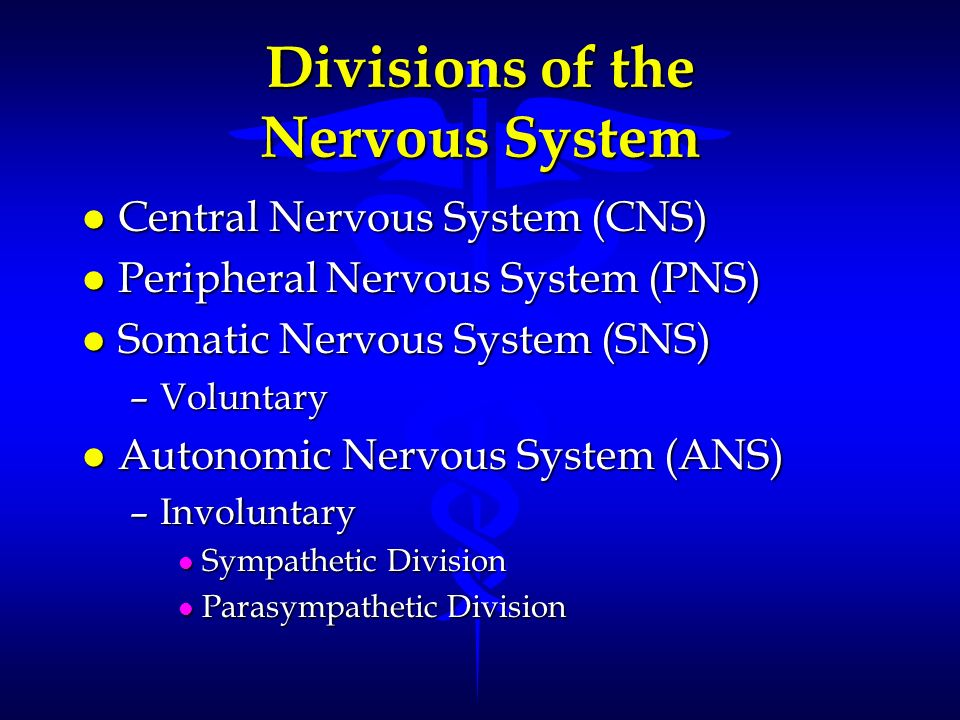 Divisions of the Nervous System l Central Nervous System (CNS) l Peripheral Nervous System (PNS) l Somatic Nervous System (SNS) –Voluntary l Autonomic