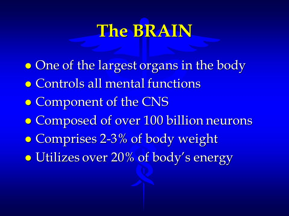 l One of the largest organs in the body l Controls all mental functions l Component of the CNS l Composed of over 100 billion neurons l Comprises 2-3%