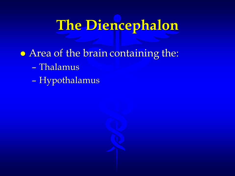 The Diencephalon l Area of the brain containing the: –Thalamus –Hypothalamus