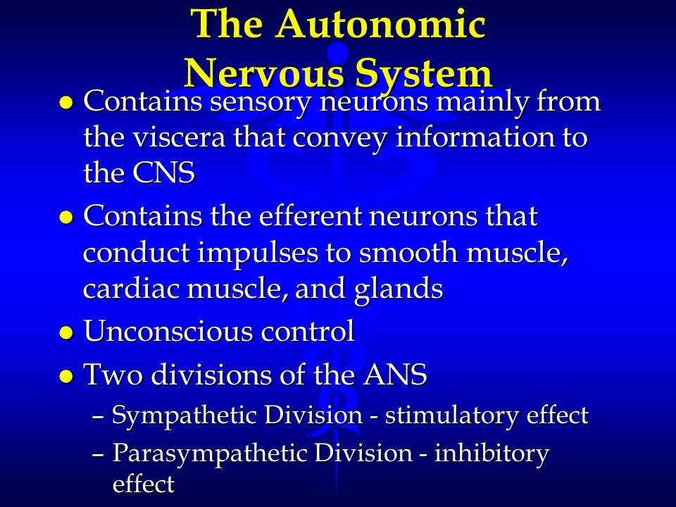 The Autonomic Nervous System l Contains sensory neurons mainly from the viscera that convey information to the CNS l Contains the efferent neurons tha