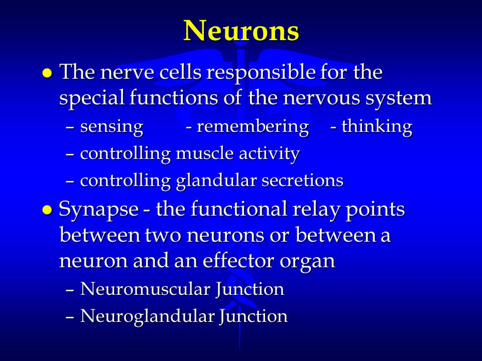 Neurons l The nerve cells responsible for the special functions of the nervous system –sensing- remembering- thinking –controlling muscle activity –co