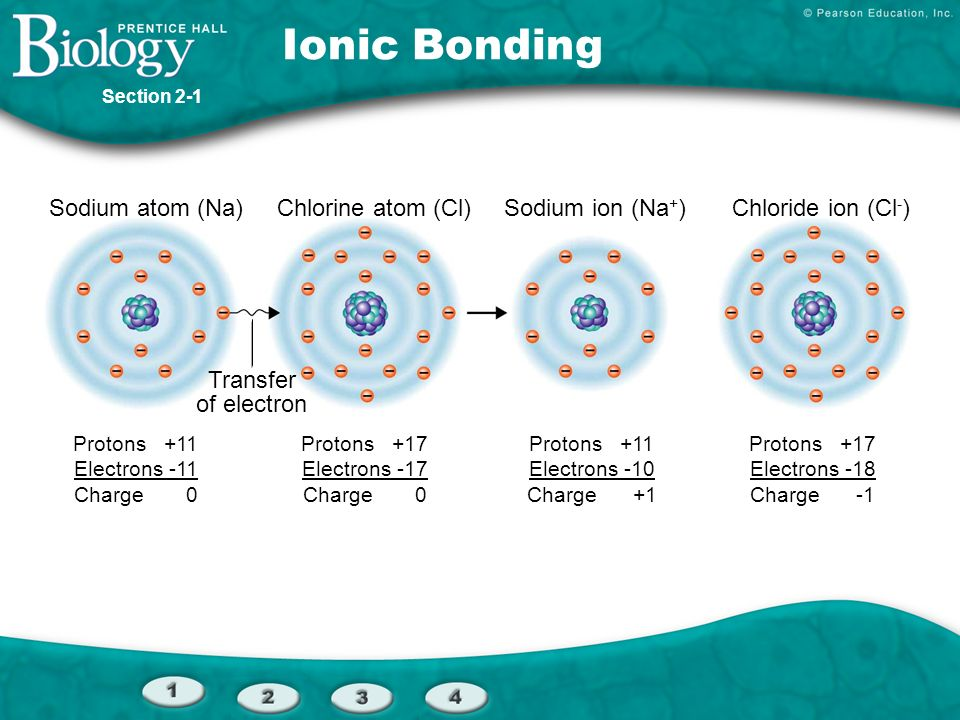 Sodium atom (Na)Chlorine atom (Cl)Sodium ion (Na + )Chloride ion (Cl - ) Transfer of electron Protons +11 Electrons -11 Charge 0 Protons +17 Electrons