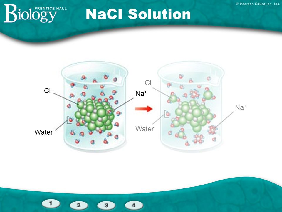 Cl - Water Cl - Na + Water Na + NaCI Solution