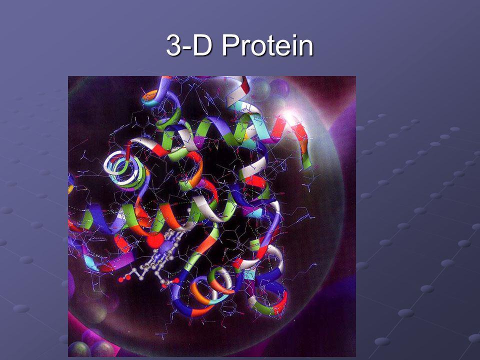 3-D Protein