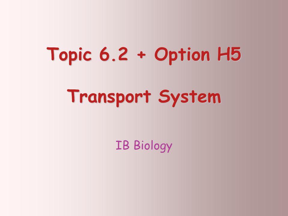 Topic 6.2 + Option H5 Transport System IB Biology