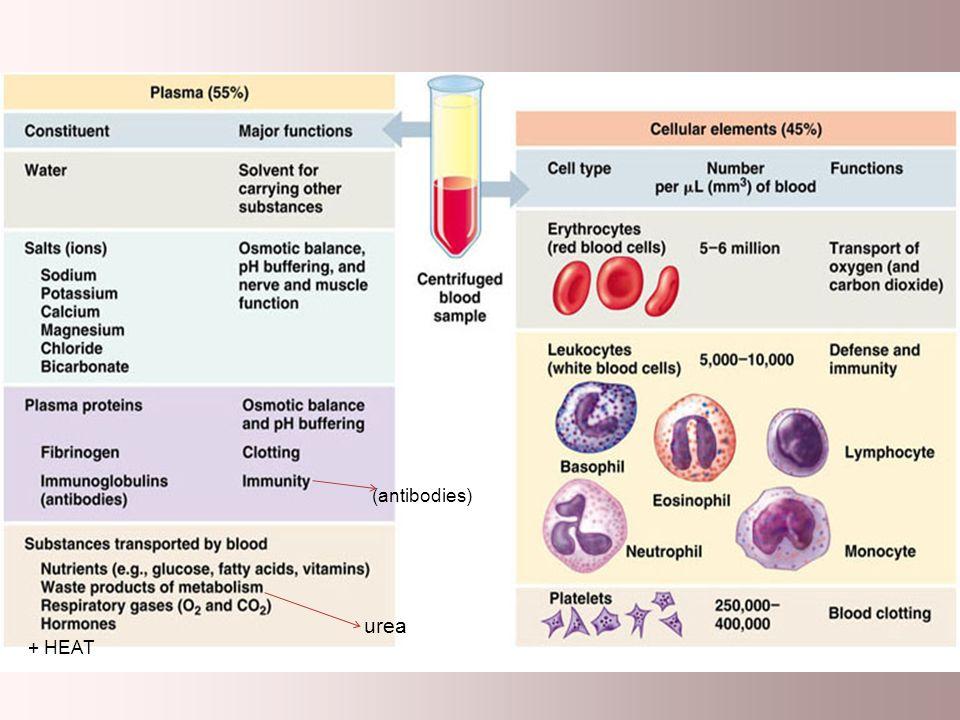 urea + HEAT (antibodies)