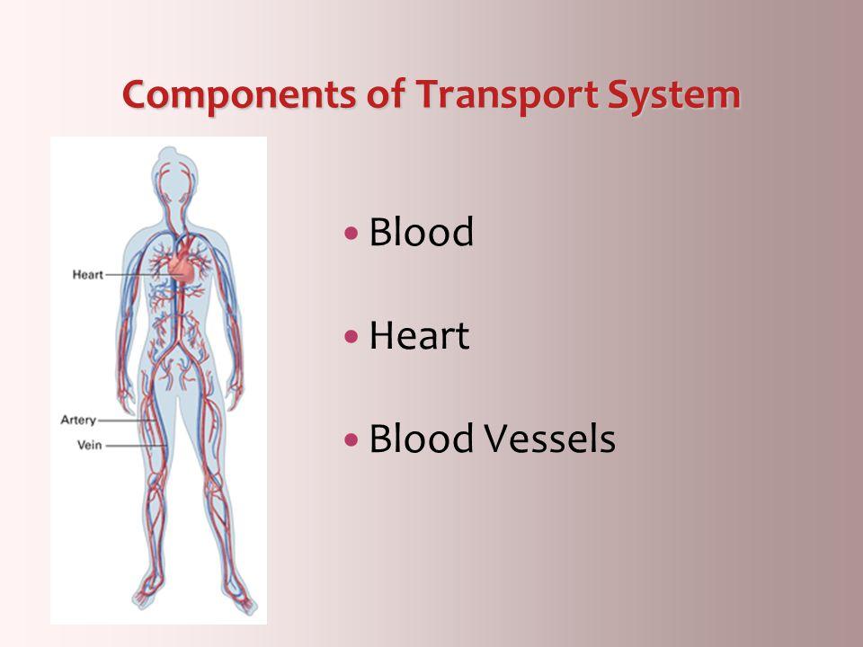 Components of Transport System Blood Heart Blood Vessels